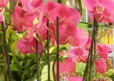Cologny Fleurs